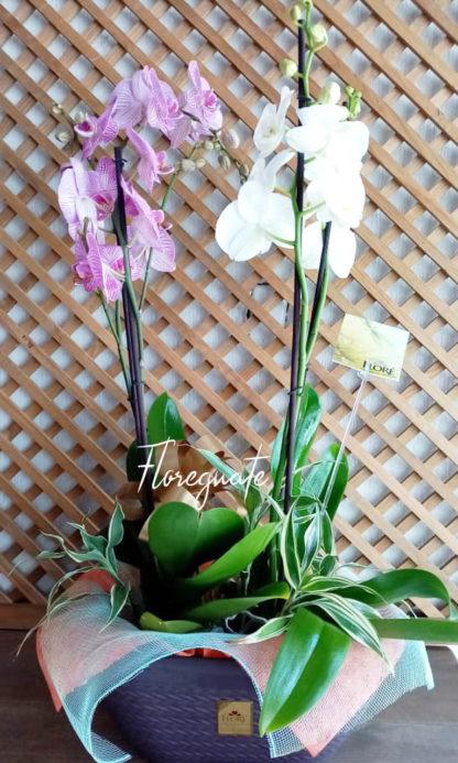 Arreglo con Orquideas