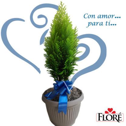arbol_para_regalar