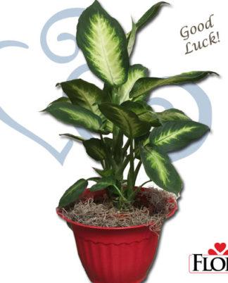 Plantas_regalo