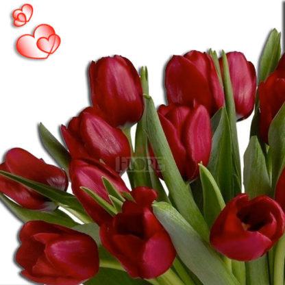 tulipanes-en-guatemala