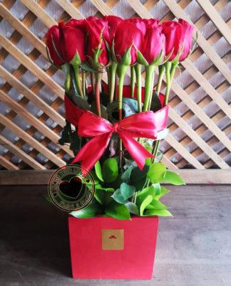 Amor de rosas Infinito