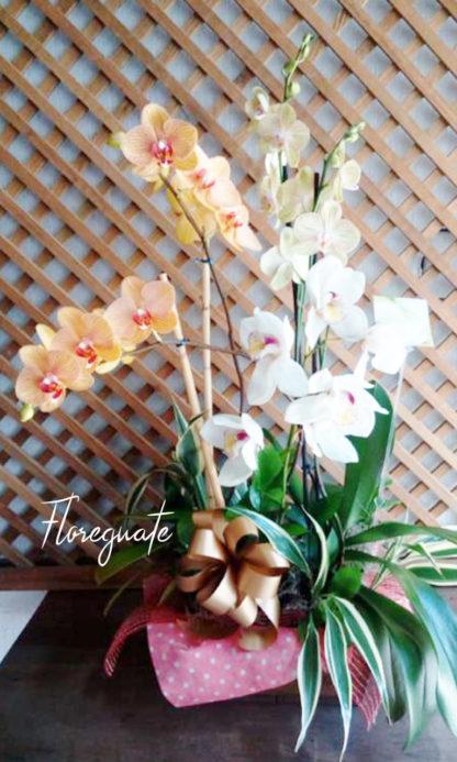 Maceta de Orquídea Grande