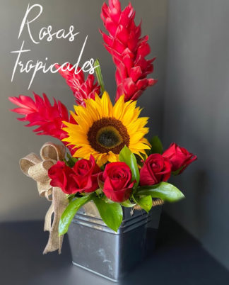 Rosas Tropicales